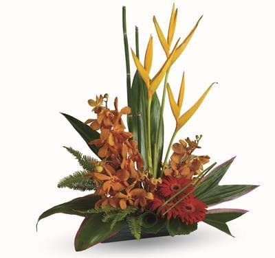 Tropical Splendour in Tauranga , Bethlehem Floral Studio