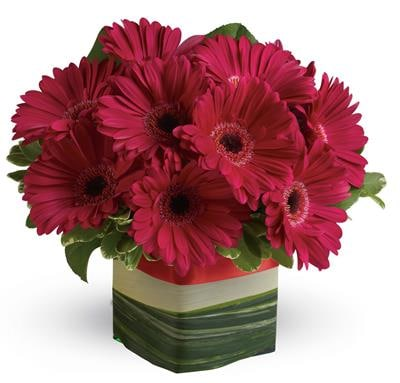 Grand Gerberas for flower delivery Australia wide