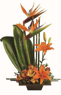 Exotic Grace in Australia NSW, Florist Works