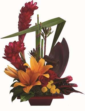 Tropical Bliss in Brisbane , Brisbane Online Florist