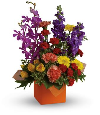 Surprise and Shine in Clayton, Melbourne , Abbadeen Florist