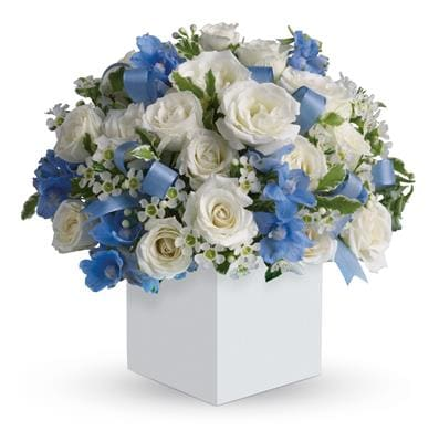 Celebrating Baby Boy for flower delivery New Zealand wide