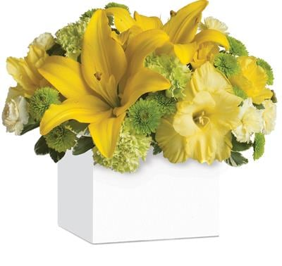 Burst of Sunshine for flower delivery New Zealand wide