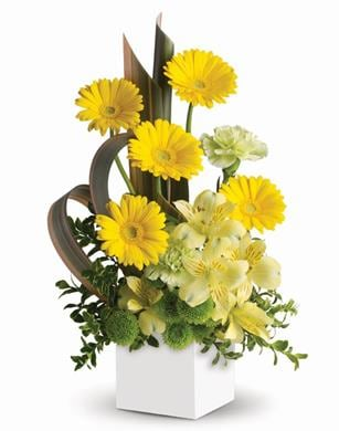 Sunbeam Smiles in Nowra , Hyams Nowra Florist
