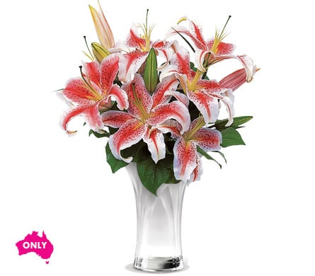 Celebrate Lilies in Geelong , Petals Florist Network