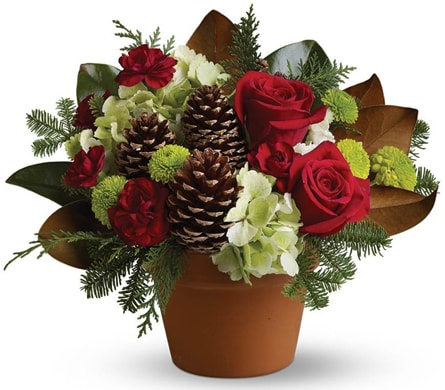 Country Christmas in Edgecliff , Edgecliff Florist