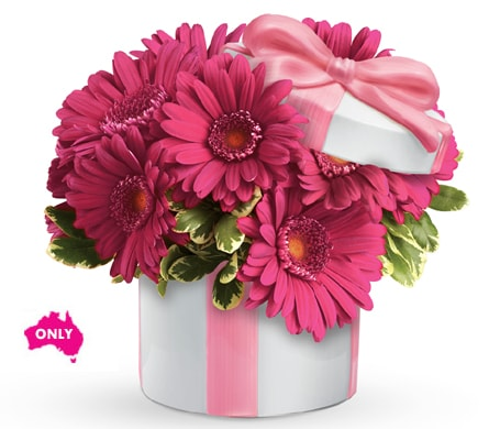 Hats Off to Daisy in Brisbane , Brisbane Online Florist