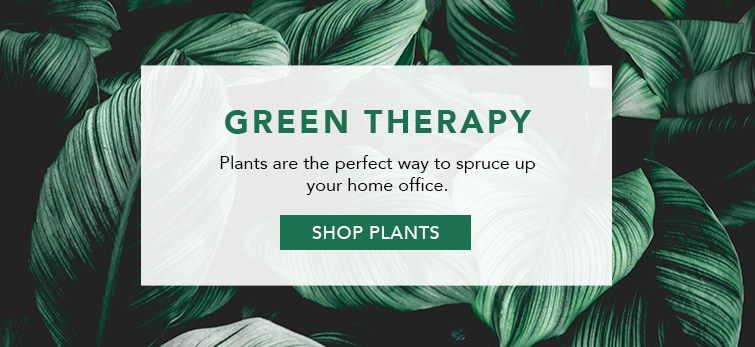 Shop Plants for Your Home Office